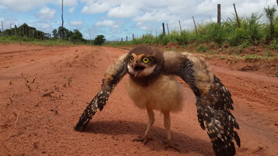 Kauz, Schlangen in Paraguay