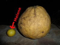Hurraaa, die ersten Mandarinen sind reif......