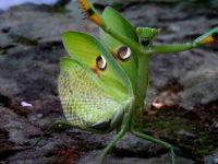 Alien im Garten