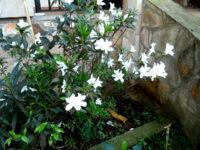 Frühling in Paraguay